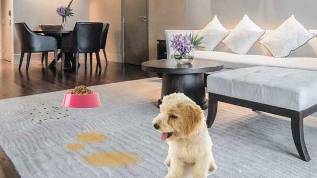 dog urine carpet cleaner